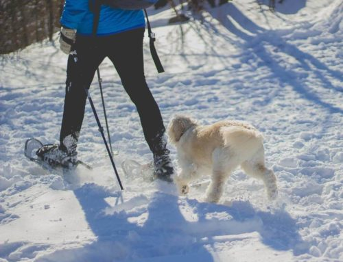 Romantic snowshoe walks, spectacular sports shows, food fairs and more!